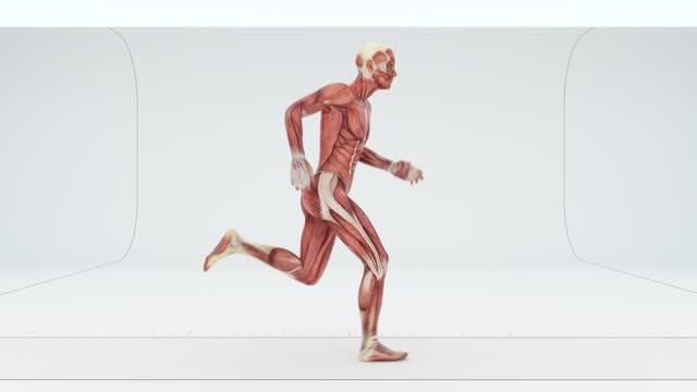 muscles of a running man - limb body part stock videos & royalty-free footage
