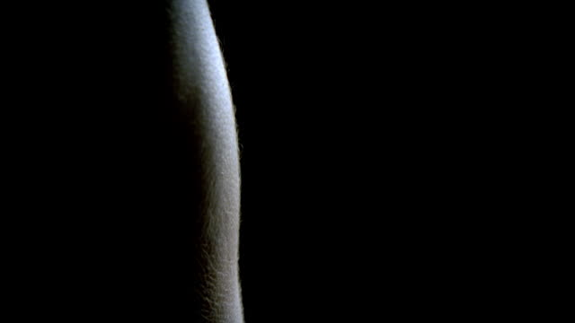 cu tu muscular man's arm/ cu shadowy profile of man's face against black background/ new york, new york - 胴体点の映像素材/bロール