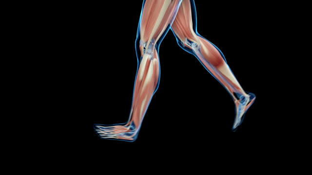 muscular system of jogger - figura maschile video stock e b–roll