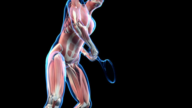 muscular system of tennis player - figura maschile video stock e b–roll