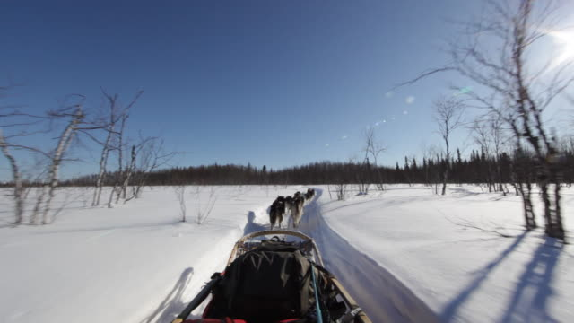 musher dogs and sled - wearable camera stock videos & royalty-free footage