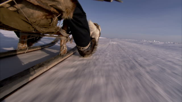 a musher riding in a sled drags his heel in the snow as sled dogs pull him across a frozen tundra. available in hd. - husky stock videos & royalty-free footage