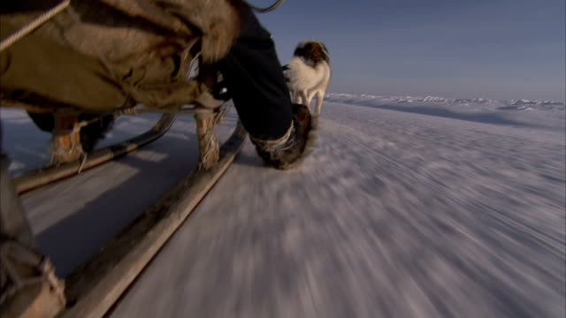 a musher slides his heel along the snow as his sled comes to a stop. available in hd. - spitz stock-videos und b-roll-filmmaterial