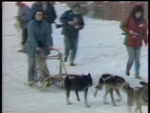 mushers and dogs glide into the finish line at the world championship sled dog race - world championship stock videos & royalty-free footage