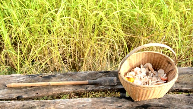 mushroom basket in rice field - foraging stock videos and b-roll footage