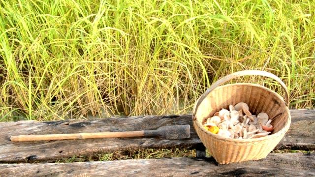 mushroom basket in rice field - foraging stock videos & royalty-free footage
