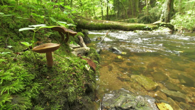 mushroom by a stream - baden wurttemberg stock videos and b-roll footage