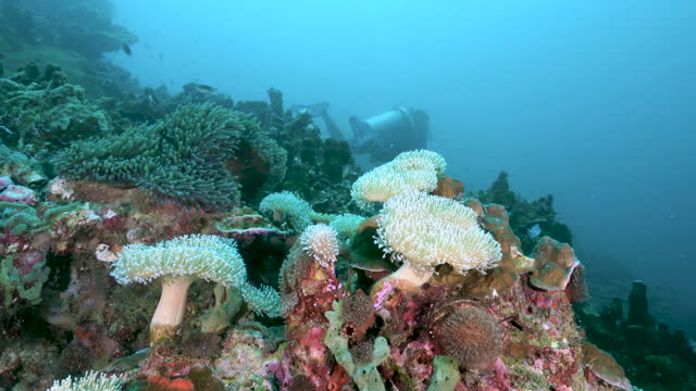 mushroom coral reef with scuba diver in distance andaman sea thailand - aqualung diving equipment stock videos & royalty-free footage
