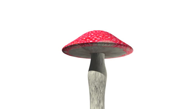 mushroom dancing loopable - fly agaric stock videos and b-roll footage