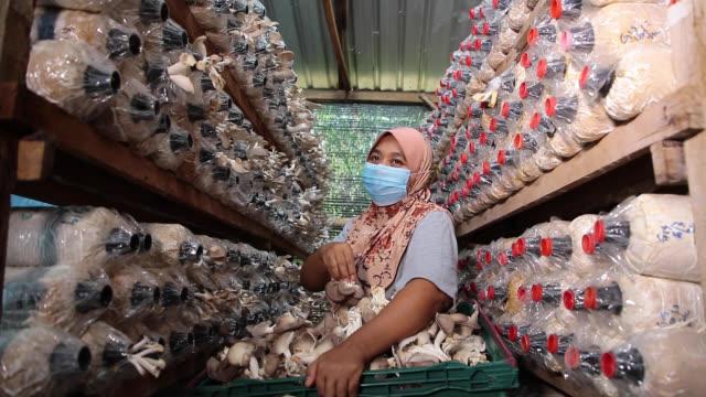 vídeos y material grabado en eventos de stock de granja de champiñones - empresa de carácter social