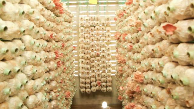 mushroom farm - mushroom stock videos & royalty-free footage
