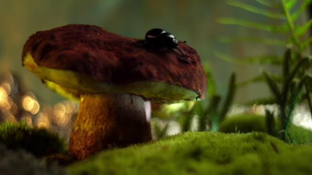 mushroom in a fairytale forest-macro - picking mushrooms stock videos and b-roll footage