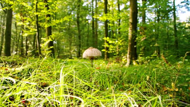 vídeos de stock, filmes e b-roll de ms cogumelo da floresta - raw footage