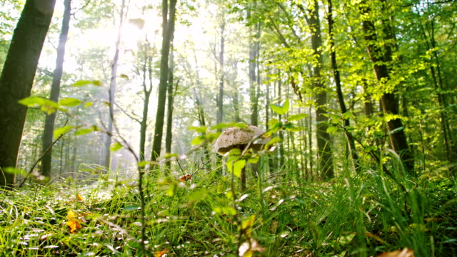 vídeos de stock, filmes e b-roll de ls cogumelo da floresta - raw footage