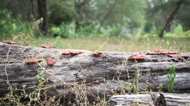 mushroom - wet stock videos & royalty-free footage
