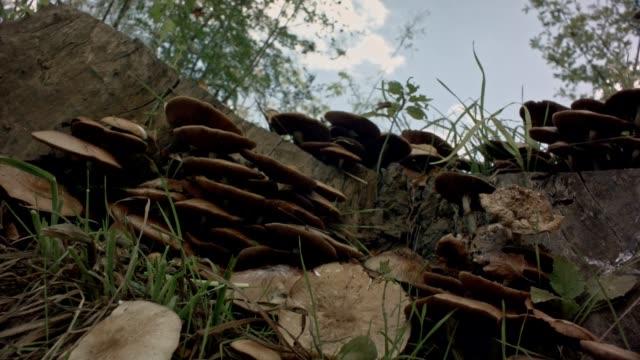 Sehr schöne Slider Schuss Pilze
