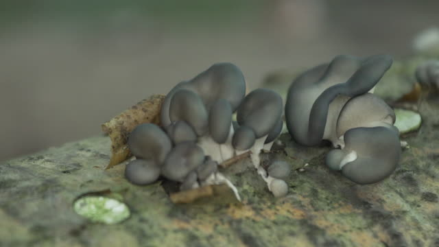 stockvideo's en b-roll-footage met mushrooms cultivated in forest - supersensorisch