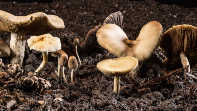 mushrooms decaying - worm stock videos and b-roll footage