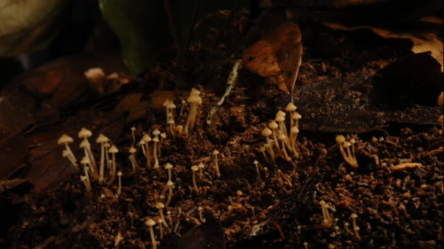 Mushrooms grow in the shady, moist soil. Available in HD.