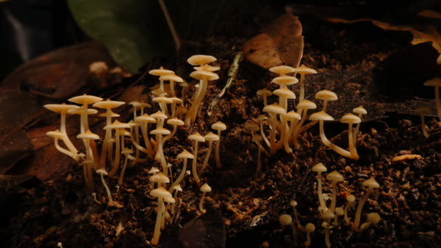 mushrooms grow tall in the shady, moist soil. available in hd. - mushroom stock videos & royalty-free footage