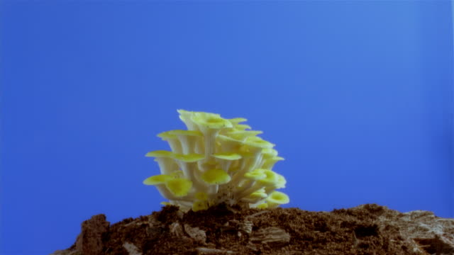 t/l, cu, mushrooms growing in earth  - toadstool stock videos and b-roll footage