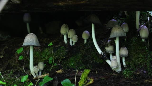 pilze im wald wachsen 4 k - pilz stock-videos und b-roll-filmmaterial