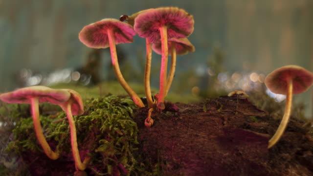 vídeos y material grabado en eventos de stock de hongos en el bosque  - mariquita