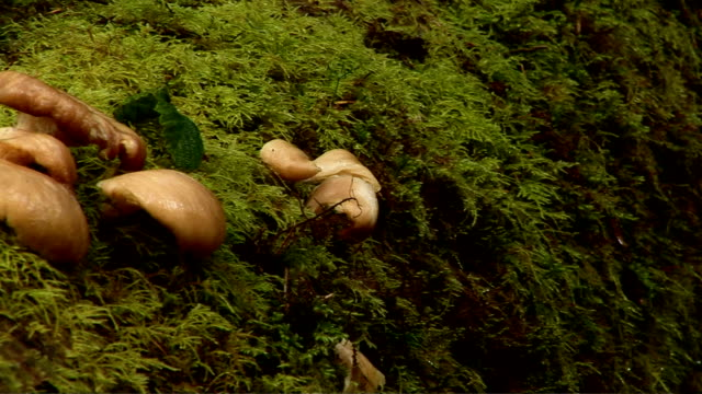 mushrooms in the forest - medium group of objects stock videos & royalty-free footage