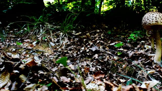 森林でキノコ/dolly スライダ - 濡れている点の映像素材/bロール
