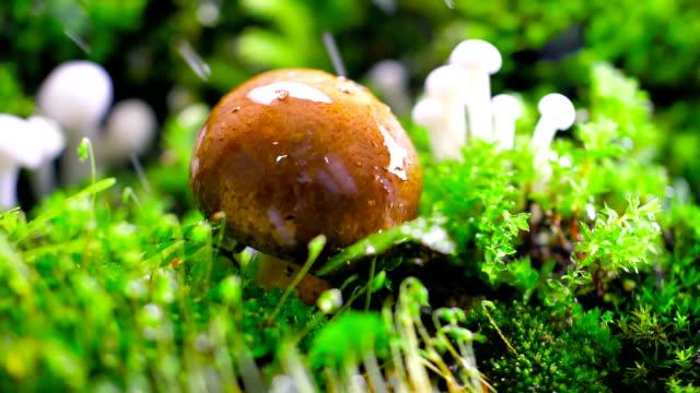 svampar i regnet - vildsvamp bildbanksvideor och videomaterial från bakom kulisserna