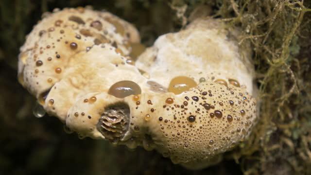 木の上のキノコ - オレゴン沿岸点の映像素材/bロール