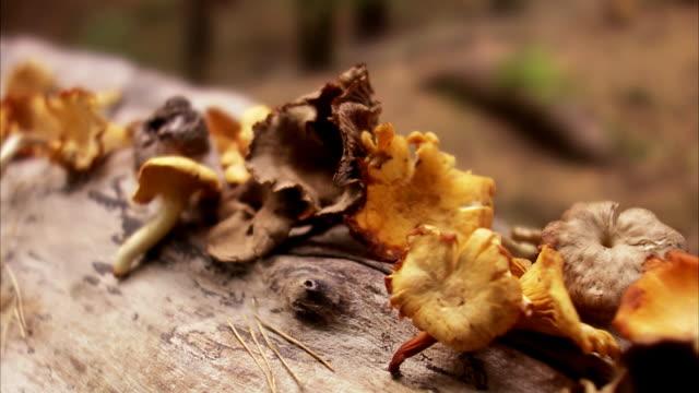 mushrooms sweden. - chanterelle stock videos & royalty-free footage