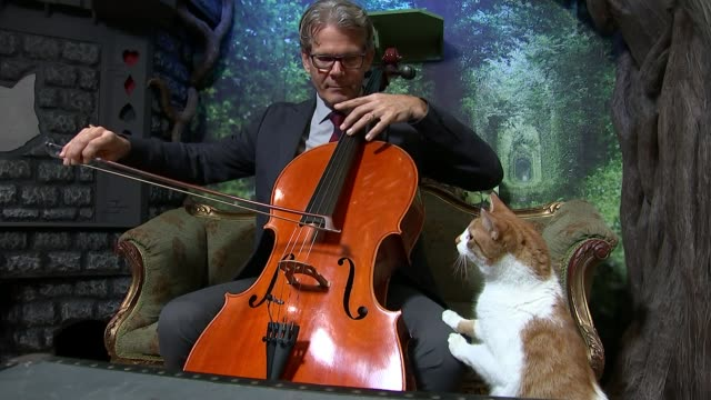 vidéos et rushes de 'music for cats' album tops the charts / cat cafe in shoreditch; england: london: shoreditch: int **music heard sot** david teie playing cello next... - violoncelle