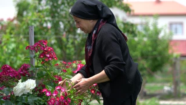 muslim senior woman gardening in backyard - mature adult stock videos & royalty-free footage