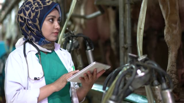 muslim woman worker controlling the milking machine - milk cow stock videos & royalty-free footage