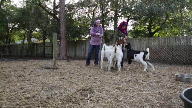 vídeos de stock, filmes e b-roll de ws zi zo muslim women tending goats on farm. - coleira de pescoço de cachorro