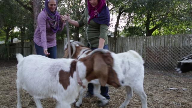 vídeos de stock, filmes e b-roll de ws ts muslim women with goats on their farm. - coleira de pescoço de cachorro