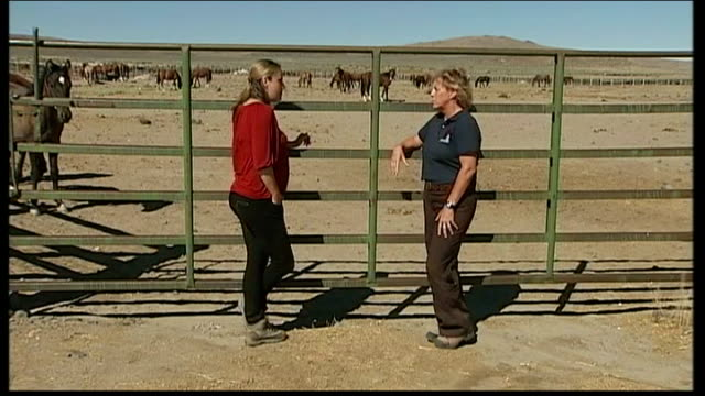 mustang horse round-up angers animal rights activists; nancy haugh interview sot - hooved animal stock videos & royalty-free footage