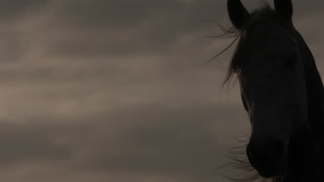 mustang horse staring ahead against cloudy sky - horse stock videos & royalty-free footage
