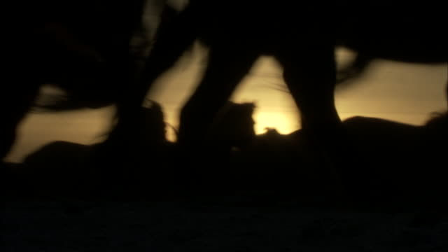 mustang horses run in silhouette of rising sun - horse stock videos & royalty-free footage