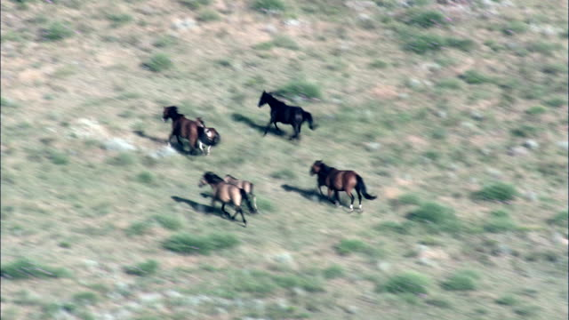Mustangs In Wild Horse Sanctuary – Luftaufnahme-South Dakota, Fall River County, Vereinigte Staaten