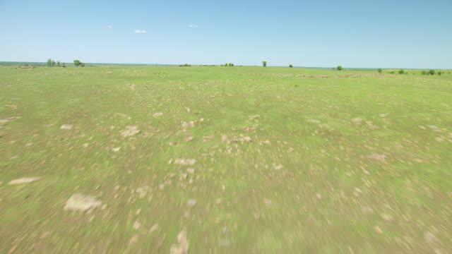 vídeos y material grabado en eventos de stock de ws aerial mustangs running through farmland in osage county / oklahoma, united states - galopar