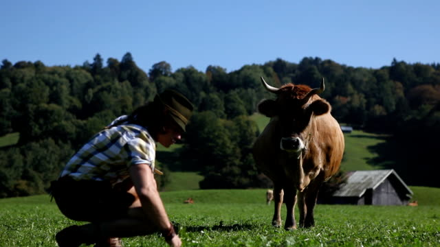 my cow - bavaria stock videos & royalty-free footage