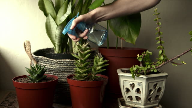my daily routine for my plants - succulent stock videos & royalty-free footage