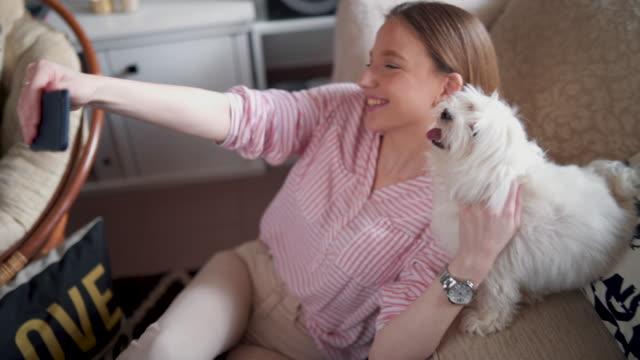 私の犬の写真のポーズが大好き - photographing点の映像素材/bロール