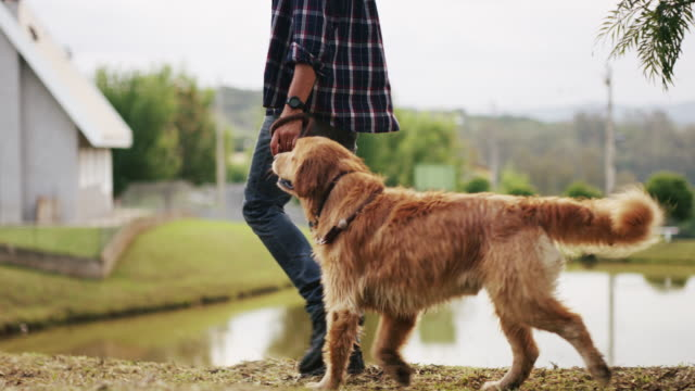 my dog, my best friend - golden retriever stock videos and b-roll footage