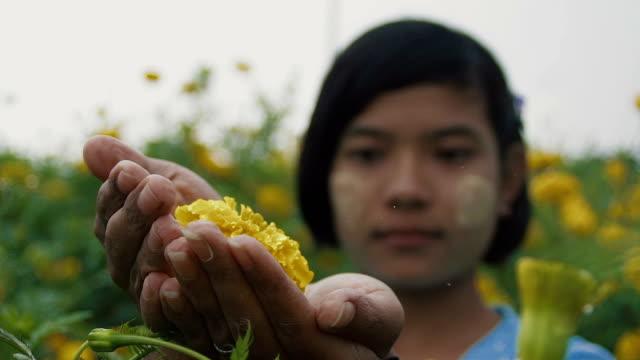 c/u slo mo myanmar teenage girl protecting a flower in a field of yellow mums, rain - endast en tonårsflicka bildbanksvideor och videomaterial från bakom kulisserna