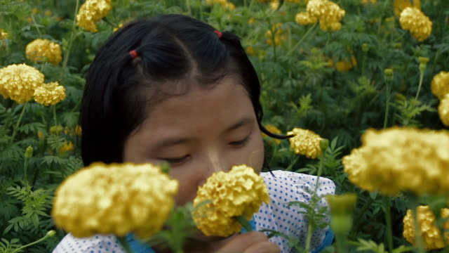 M/S SLO MO Myanmar teenage girl smelling a flower in a field of yellow mums, rain