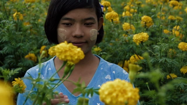 m/s slo mo myanmar teenage protecting a flower in a field of yellow mums, rain - one teenage girl only stock videos & royalty-free footage