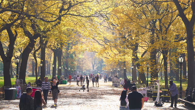 vidéos et rushes de myriads autumn color leaves flutter down from rows of autumn color trees at the mall in central park at new york city on november 10 2020. - central park manhattan